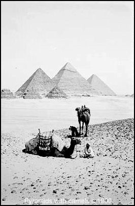 Pyramids and Bedouins